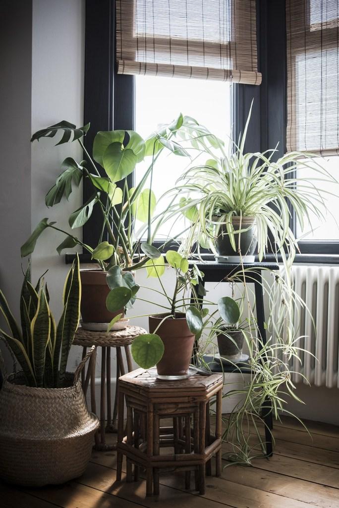 Biljke za spavaću sobu