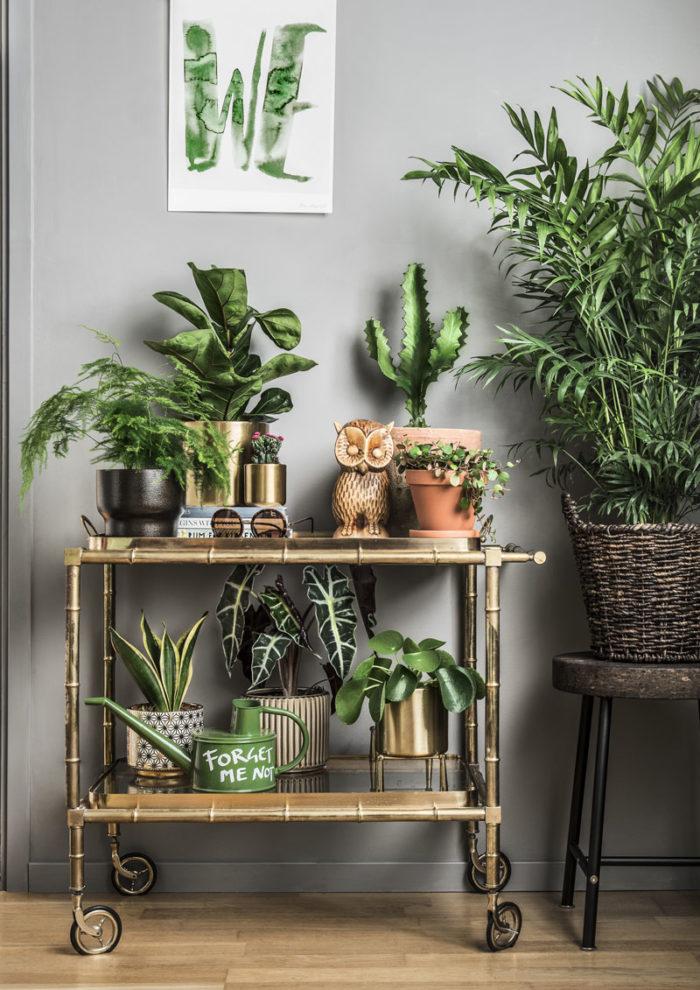 biljke za detoks