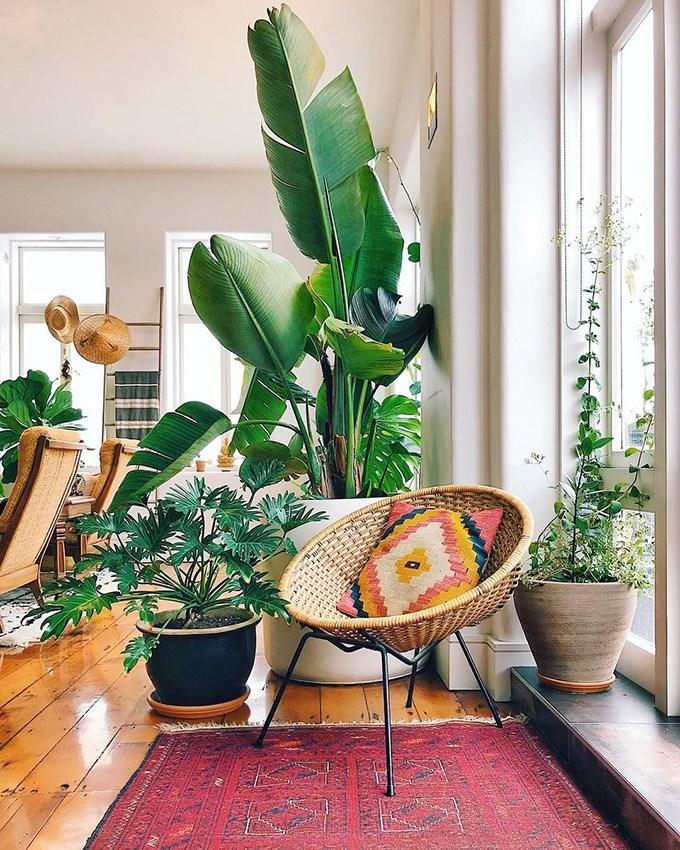 velike biljke za stan